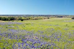 Blaue Mützen-Blume Stockfotos