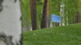 Blaue Markierungsfahne, die über den Himmel wellenartig bewegt Blauer Sumpf-Schwertlilie, die auf den Wind wellenartig bewegt stock footage