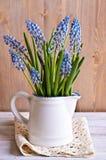 Blaue Muscariblumen Lizenzfreie Stockfotografie