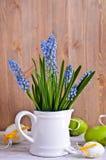 Blaue Muscariblumen Stockbilder