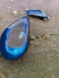 Blaue Muscheln gewaschen oben auf dem Strand Stockfotos