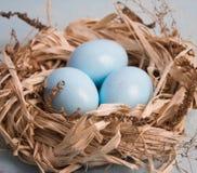 Blaue Ostereier im Nest auf hölzernem Hintergrund Stockfotos
