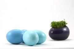 Blaue Ostereier mit frischer Kresse Stockfoto