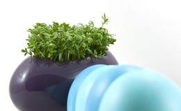 Blaue Ostereier mit frischer Kresse Lizenzfreies Stockfoto
