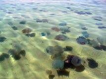 Blaue Quallen in Schwarzem Meer Lizenzfreies Stockbild