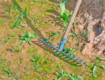 Blaue Rührstange Stockbild