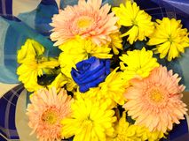 Blaue Rose Lizenzfreie Stockfotos