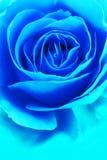 Blaue Rose stockbild