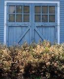 Blaue rustikale Holztür mit blühenden Büschen des Weiß Stockfotos