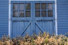 Blaue rustikale Holztür mit blühenden Büschen des Weiß Lizenzfreies Stockbild