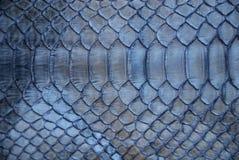 Blaue Schlangehaut stockfotos