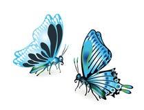Blaue Schmetterlinge auf Weiß Stockfoto