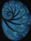 Blaue Schnecke-Shell-Fossil-Spirale Stockbild