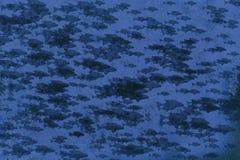 Blaue Seite der Fische Lizenzfreie Stockfotografie