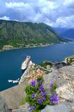 Blaue Sommerblume über Kotor-Bucht Lizenzfreies Stockbild