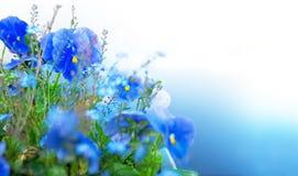 Blaue Sommerblumen Lizenzfreie Stockfotografie