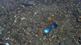 Blaue Sonnenbrille im Fluss stock video