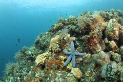 Blaue Starfish im tropischen Korallenriff Lizenzfreies Stockbild