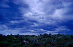 Blaue Stunde Wolken über Arrowleaf-Balsam Lizenzfreie Stockfotos