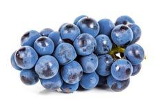 Blaue Traube Stockbild