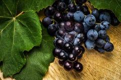 Blaue Trauben stockfotos