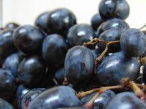 Blaue Trauben lizenzfreie stockfotos