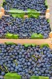 Blaue Trauben in den Kisten Stockfoto
