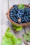 Blaue Trauben in einem Korb Stockfoto