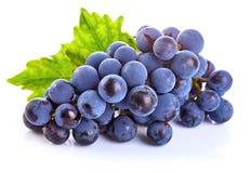 Blaue Trauben mit grüner Blattgesunder ernährung Stockbild