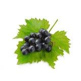 Blaue Trauben und Blatt lokalisiert auf weißem Hintergrund (Frucht) Lizenzfreie Stockfotos