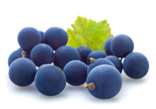 Blaue Traubenbeere lizenzfreie stockbilder