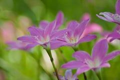 Blaue tropische Blume Lizenzfreies Stockfoto