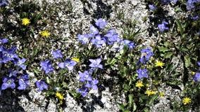 Blaue und gelbe Blumen Lizenzfreies Stockbild