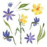 Blaue und gelbe Blumen Lizenzfreie Stockbilder