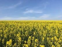 Blaue und gelbe Landschaft im Frühjahr stockfoto