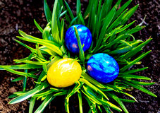 Blaue und gelbe Ostereier im Garten Stockfotografie