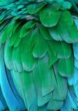 Blaue und grüne Federn Stockbild
