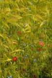 Blaue und rote Blumen Stockfoto