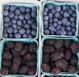 Blaue und schwarze Beeren Stockfotos