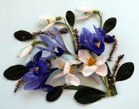 Blaue und weiße Blumen der Frühlings-Zusammensetzung Stockbilder