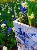 Blaue und weiße Blumen in Keukenhof Lizenzfreies Stockfoto