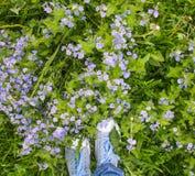Blaue Vergissmeinnichte im grünen Gras im Sommer Lizenzfreies Stockbild