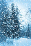 Blaue Waldvertikale Stockfotos