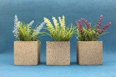 Blaue, weiße und purpurrote Heather Plant Concrete Pot lizenzfreies stockfoto