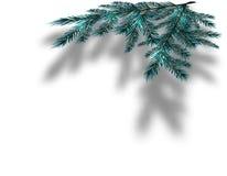 Blaue Weihnachtsbaumaste auf einem lokalisierten weißen Hintergrund mit dem Schatten in der Perspektive Abbildung Stockfotos