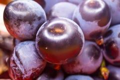 Blaue Weinreben der Beere auf einer roten Untertasse Lizenzfreies Stockbild