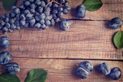 Blaue Weintraube und Pflaumen Abbildung der roten Lilie Lizenzfreie Stockbilder
