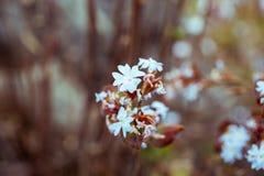 Blaue wilde Blume Stockfotos