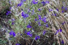 Blaue wilde Blumen stockfoto