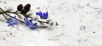 Blaue wilden Niederlassungen der Blumen Scilla des Frühlinges, der Weide und des adler auf De Stockfoto